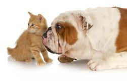 Hund och katt Arkivfoton