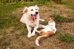 Hund och katt Arkivfoto