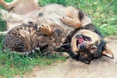 Hund och katt Royaltyfri Bild
