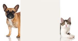 Hund och katt Royaltyfria Bilder
