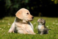 Hund och katt Arkivbilder