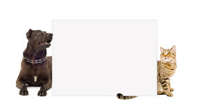Hund och katt bak ett baner Royaltyfri Bild