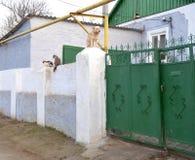 Hund och katt på staketet Arkivbild