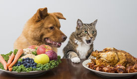 Hund och katt som väljer mellan veggies och kött Arkivbild