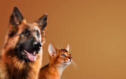 Hund och katt tillsammans på brun bakgrund royaltyfri foto