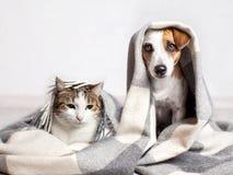 Hund och katt under en pläd arkivfoto