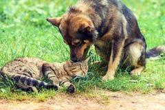 hund- och kattbästa vän Royaltyfri Fotografi