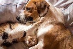 Hund- och kattomfamning på säng Royaltyfria Bilder