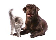 Hund och kattunge Royaltyfri Bild