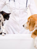 Hund och kattunge på veterinären arkivbilder