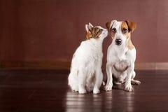Hund- och kattvänner Arkivbilder