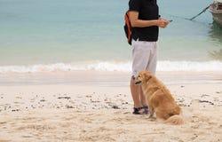 Hund och kvinna Fotografering för Bildbyråer