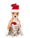 Hund och liten katt i röda julhattar som tillsammans sitter Isolerat på vit Royaltyfria Foton