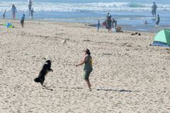 Hund- och manlekbollen på havet sätter på land Royaltyfri Bild