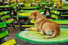 Hund och tabell i trädgården. Arkivfoto
