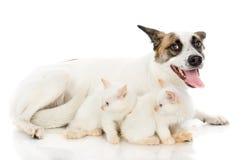 Hund och två kattungar. Royaltyfri Fotografi