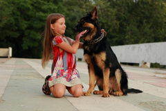 Hund och unge Royaltyfri Foto