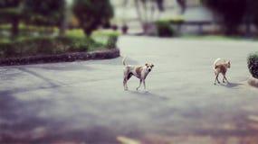 Hund och vän Arkivfoto