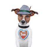 Hund oktoberfest lizenzfreie stockfotos