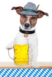 Hund oktoberfest lizenzfreies stockbild