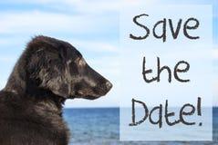 Hund in Ozean, Text-Abwehr das Datum Lizenzfreies Stockfoto