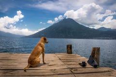 Hund på Atitlan sjön Arkivbilder