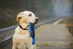 Hund på den järnväg plattformen Royaltyfria Bilder