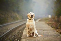 Hund på den järnväg plattformen Fotografering för Bildbyråer