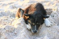 Hund på den vita sandstranden Royaltyfri Bild