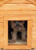 Hund på det lilla trähuset. Arkivfoton