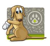 Hund på doktorn Arkivbilder