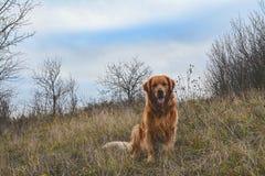 Hund på en äng fotografering för bildbyråer