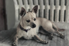 Hund på en banch! Arkivbild