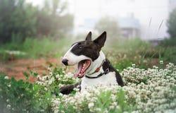 Hund på en blomningäng royaltyfri fotografi