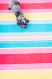 Hund på en färgglad filt arkivbilder