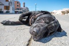 Hund på en jordning Arkivfoton