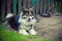 Hund på en kedja Royaltyfri Fotografi