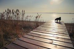 Hund på en pir Arkivfoto