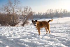 Hund på en snö Arkivbild