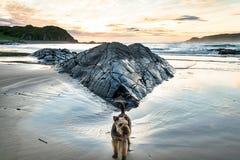 Hund på en strand royaltyfria foton