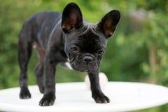 hund på en tabell royaltyfri fotografi