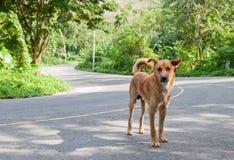 Hund på en väg Arkivfoto