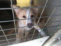 Hund på ett räddningsaktionskydd i en bur royaltyfria bilder