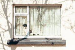 Hund på fönsterfönsterbrädan Royaltyfri Bild