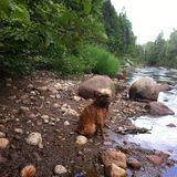 Hund på floden Arkivbilder