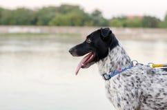 Hund på floden Royaltyfria Bilder