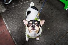 Hund på gatan arkivbild