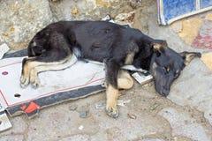 Hund på gatan Royaltyfria Bilder
