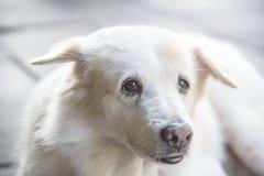 Hund på golvet Fotografering för Bildbyråer