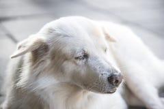 Hund på golvet Royaltyfri Foto